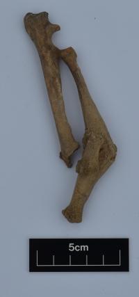 Dog with broken foreleg