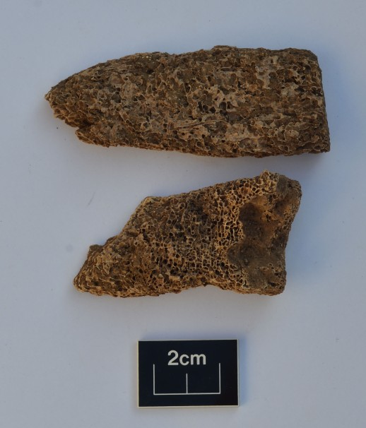 Roman whale bone